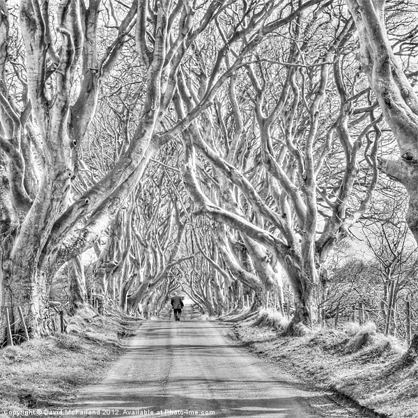 Nearly Home in the Dark Hedges Canvas print by David McFarland