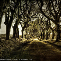 Buy canvas prints of Mysterious Dark Hedges by David McFarland