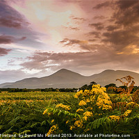 Buy canvas prints of Sunset over the Mournes by David McFarland