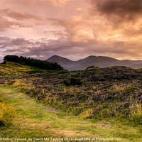 Buy canvas prints of Sunset over Slieve Donard by David McFarland