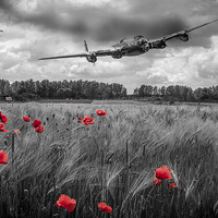Buy canvas prints of Lest we forget by David McFarland