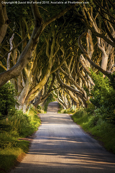 Light in the Dark Hedges Canvas Print by David McFarland
