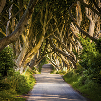 Buy canvas prints of  Light in the Dark Hedges by David McFarland