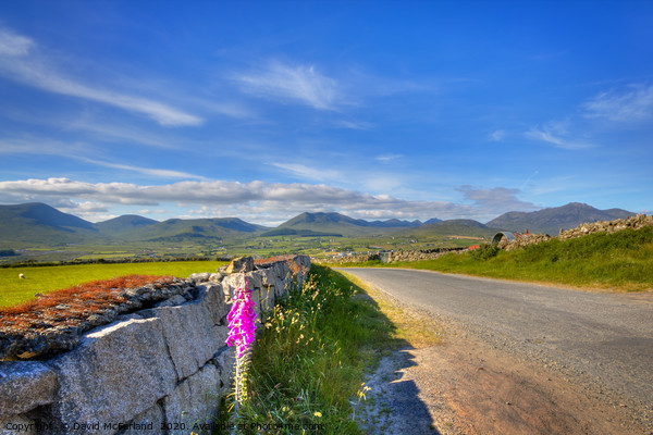 Summertime in the Mournes Canvas Print by David McFarland