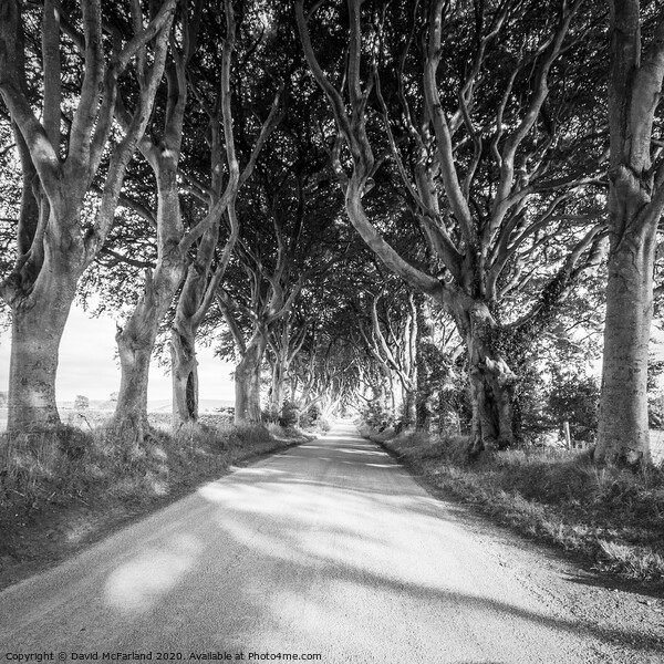 Light in the Dark Hedges in Northern Ireland Canvas Print by David McFarland