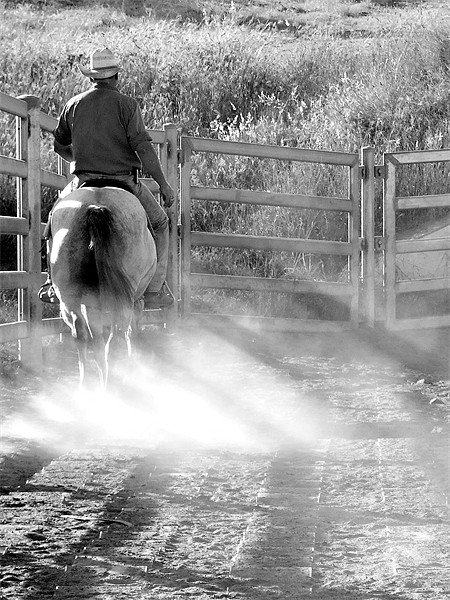 Pen Rider Canvas Print by Rod Last Name
