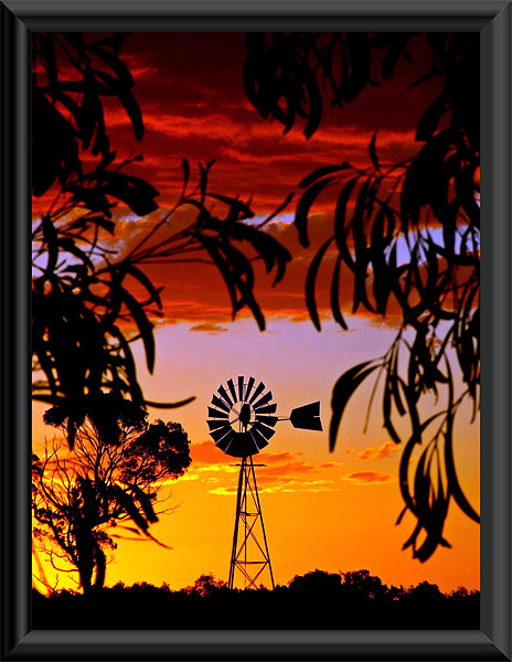 Mill in the Bush Print by Rod Last Name