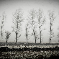 Buy canvas prints of Winter Trees by Andy Morley