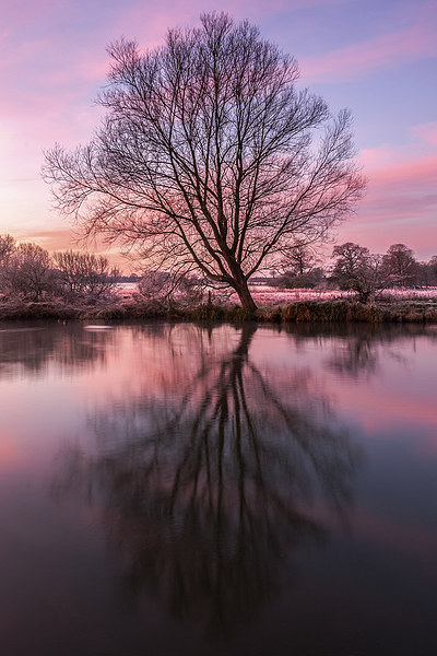Tree on the River Bure Canvas print by Stephen Mole