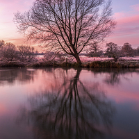 Buy canvas prints of Tree on the River Bure by Stephen Mole