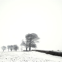 Buy canvas prints of Trees in snow by Stephen Mole