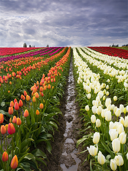 Sea of Color  Canvas print by Mike Dawson