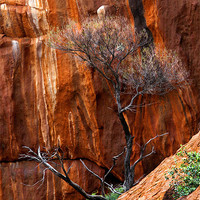 Buy canvas prints of Clinging to Life by Mike Dawson