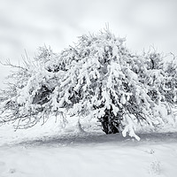 Buy canvas prints of Winter Blanket by Mike Dawson