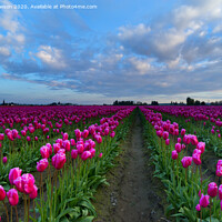 Buy canvas prints of Surrounded by Pink by Mike Dawson