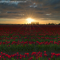 Buy canvas prints of Sea of Red by Mike Dawson