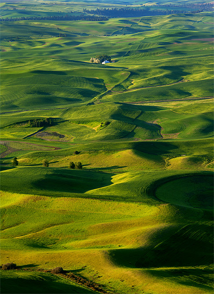 Palouse Morning Acrylic by Mike Dawson