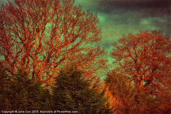 Trees, Trees, Trees Canvas Print by Julie Coe
