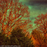 Buy canvas prints of Trees, Trees, Trees by Julie Coe