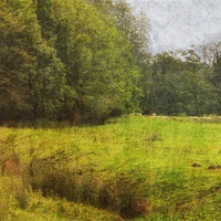 Buy canvas prints of Bottom of the Meadow by Julie Coe