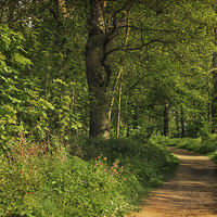 Buy canvas prints of Blickling Woods 5 by Julie Coe