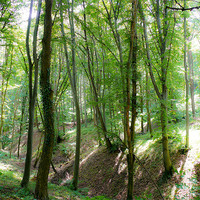 Buy canvas prints of softy forest by Jozsef Borsfai