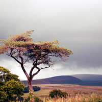 Buy canvas prints of  Just a tree by Alexia Miles