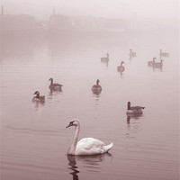Buy canvas prints of Swan & Ducks by Mike Sherman Photography