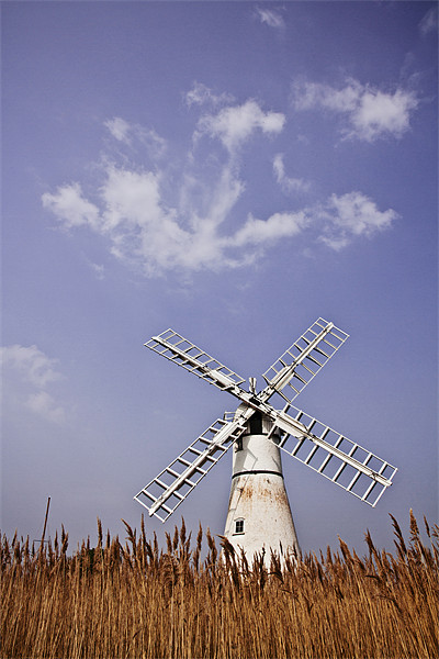Thurne Windmill through the Reeds Canvas print by Paul Macro