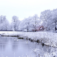 Buy canvas prints of Snow, Trees and Bulrushes by Stuart Thomas