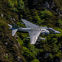 Buy canvas prints of Harrier GR9 flying low by Oxon Images