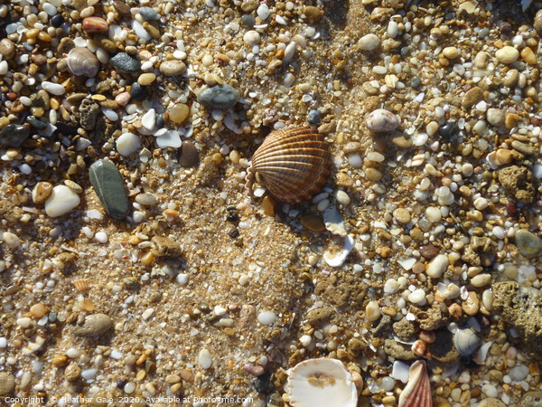 Searching for that pearl Framed Print by Heather Gale