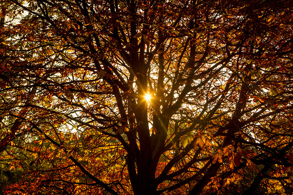 Autumn Light. Canvas print by David Hare