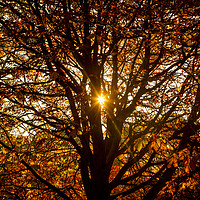 Buy canvas prints of Autumn Light. by David Hare