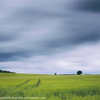 Buy canvas prints of Clouds moving above field of barley. by Liam Grant