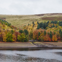 Buy canvas prints of Autumnal trees at Derwent Reservoir. Derbyshire, U by Liam Grant