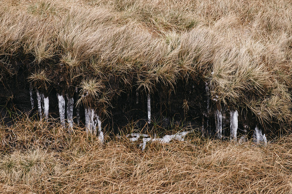 Frozen icicles among the peat and moorland grass.  Canvas print by Liam Grant