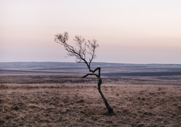 Lone tree on moorland at twilight. Derbyshire, UK. Canvas print by Liam Grant