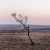 Buy canvas prints of Lone tree on moorland at twilight. Derbyshire, UK. by Liam Grant