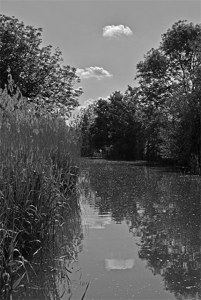 The Droitwich Canal Framed Print by graham young