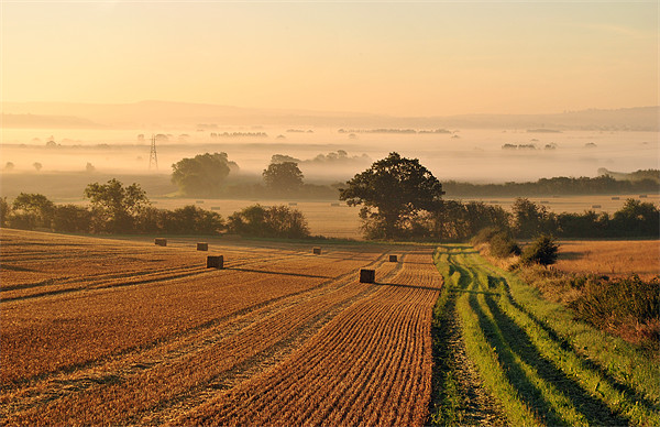Harvest Dawn in the Vale Canvas Print by graham young