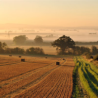 Buy canvas prints of Harvest Dawn in the Vale by graham young