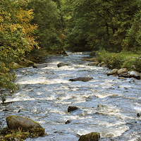 Buy canvas prints of The River Lyn at Watersmeet by graham young