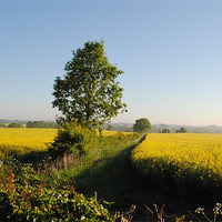 Buy canvas prints of Rape Fields by graham young
