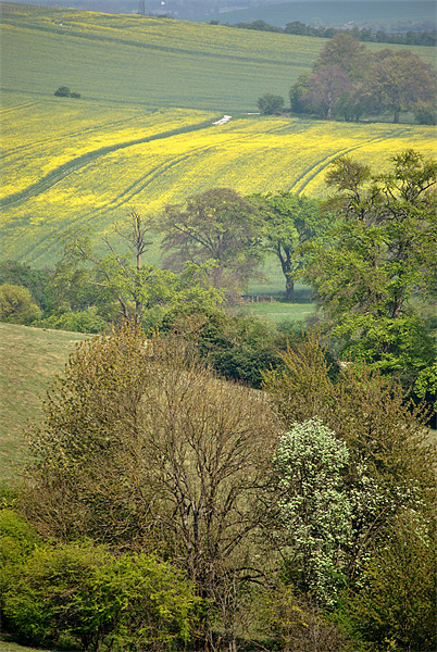 Spring in the Chilterns Canvas print by graham young