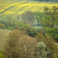 Buy canvas prints of Spring in the Chilterns by graham young
