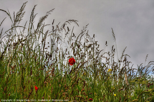 Wild Grass And Poppies Canvas Print by Nicola Clark
