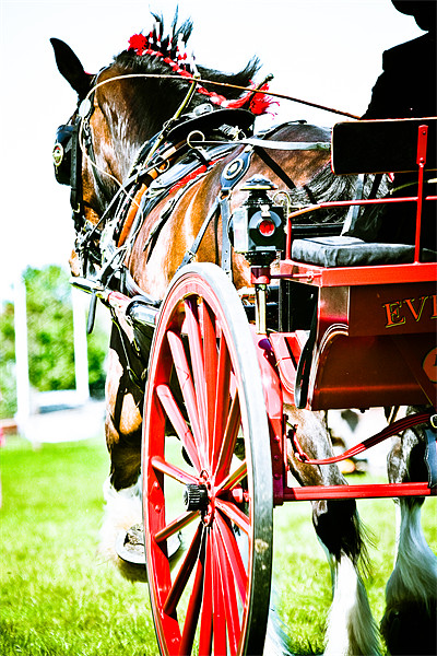Horse & Carriage Canvas Print by tony golding