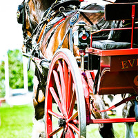 Buy canvas prints of Horse & Carriage by tony golding
