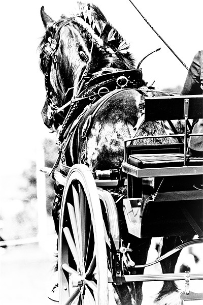 Black & White Horse & Carriage Canvas Print by tony golding